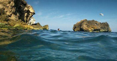 Отдыхающие решили искупаться под Одессой, но увидели в воде жуткое зрелище